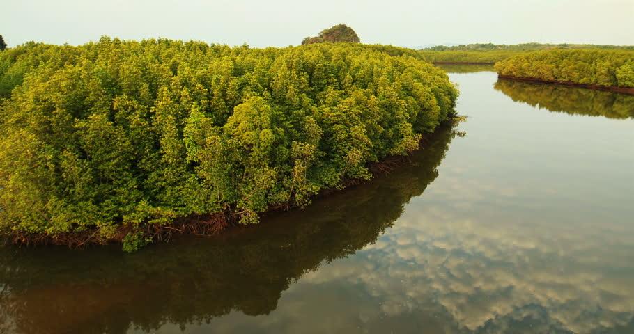 manfaat hutan mangrove