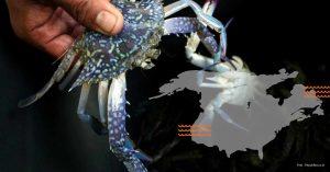 Kepiting Rajungan